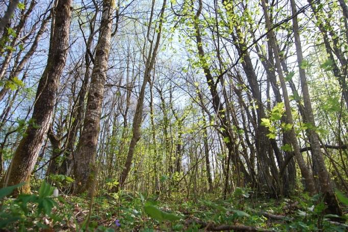 valtrebbia-verde-alberi-bosco-ambiente